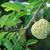 vla · appel · groeiend · boom · natuur · voedsel - stockfoto © supersaiyan3