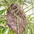 méhkaptár · fa · levél · pálmafa · egészség · háttér - stock fotó © supersaiyan3