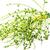 Palm · семени · белый · феникс · продовольствие - Сток-фото © supersaiyan3