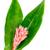tropikalnych · kwiat · zielony · liść · biały · tablicy - zdjęcia stock © supersaiyan3