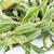 növény · fekete · szezám · hüvely · zárva · felfelé - stock fotó © supersaiyan3