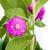 güzel · mor · çiçekler · çiçek · çim · doğa - stok fotoğraf © supersaiyan3