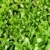 zöld · fű · zöld · kert · gyep · fű · árnyékok - stock fotó © supertrooper