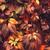 piros · ősz · Virginia · levél · izolált · fehér - stock fotó © supertrooper