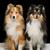 iki · köpekler · güzel · oturma · birlikte · beyaz - stok fotoğraf © svetography