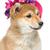 mooie · puppy · roze · hoed · zwarte · japans - stockfoto © svetography