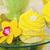 giallo · trasparente · piatto · fiore - foto d'archivio © svetography