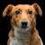terriër · naar · honden - stockfoto © svetography