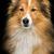 köpek · portre · güzel · üç · renkli - stok fotoğraf © svetography