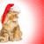 молодые · кошки · Рождества · Hat · белый · котенка - Сток-фото © svetography