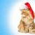 jonge · kat · christmas · hoed · witte · kitten - stockfoto © svetography