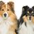 iki · köpekler · güzel · yalıtılmış · beyaz · bo - stok fotoğraf © svetography
