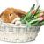 güzel · iç · tavşan · çok · güzel · kırmızı · havuç - stok fotoğraf © svetography