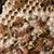 ワスプ · 巣 · コロニー · ツリー · ジャングル · エクアドル - ストックフォト © sweetcrisis