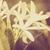 fiore · bianco · vintage · giardino · natura · parco · Thailandia - foto d'archivio © sweetcrisis