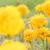 çiçek · doğa · bahçe · kafa · bitki · Asya - stok fotoğraf © sweetcrisis