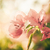 紙 · 花 · ヴィンテージ · 庭園 · 自然 · 公園 - ストックフォト © sweetcrisis