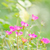 virág · természet · fény · zöld · kék · fej - stock fotó © sweetcrisis