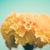 marigolds or tagetes erecta flower vintage stock photo © sweetcrisis