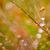 fresco · musgo · gotas · de · água · verde · natureza · velho - foto stock © sweetcrisis