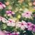 vintage · Madagáscar · rosado · rosa · flor · grama - foto stock © sweetcrisis