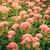 ウール · 花 · 花 · ヴィンテージ · 自然 - ストックフォト © sweetcrisis