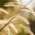 gaz · természet · virág · zöld · szeretet · kert - stock fotó © sweetcrisis