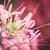 pók · virág · kert · növény - stock fotó © sweetcrisis
