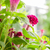 flor · belo · flor · amarela · lã · jardim · de · flores · jardim - foto stock © sweetcrisis