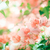 paper flowers or bougainvillea vintage stock photo © sweetcrisis