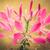 örümcek · çiçek · avcılık · ıslak · yaz · damla - stok fotoğraf © sweetcrisis
