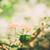 желтый · кустарник · изображение · природы · цвета · ярко - Сток-фото © sweetcrisis