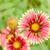 laranja · perene · flor · sol · estrela - foto stock © sweetcrisis
