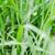 folha · gotas · de · água · natureza · primavera · grama · jardim - foto stock © sweetcrisis