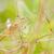 szitakötő · kert · zöld · természet · gyönyörű · rovar - stock fotó © sweetcrisis