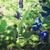 asian pigeonwings vintage stock photo © sweetcrisis