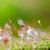 musgo · gotas · de · água · natureza · água · grama · jardim - foto stock © sweetcrisis