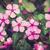grama · fresco · metálico · primavera · metal - foto stock © sweetcrisis