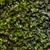 fresco · musgo · gotas · de · água · verde · natureza · macro - foto stock © sweetcrisis