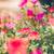 kicsi · virágoskert · természet · kert · szépség · növény - stock fotó © sweetcrisis