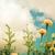 renkli · altın · parlak · tebrik · kartı · cenaze · sevmek - stok fotoğraf © sweetcrisis