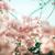 papír · virágok · klasszikus · kert · természet · park - stock fotó © sweetcrisis