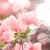 紙 · 花 · 庭園 · 自然 · 公園 · 春 - ストックフォト © sweetcrisis