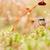 ugrik · pók · zöld · természet · kert · tavasz - stock fotó © sweetcrisis