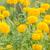 flor · natureza · jardim · cabeça · planta · Ásia - foto stock © sweetcrisis