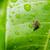 rovar · zöld · természet · kert - stock fotó © sweetcrisis