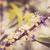 peu · fleur · vintage · jardin · de · fleurs · nature · parc - photo stock © sweetcrisis