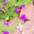 mező · virág · levél · kert · nyár · kék - stock fotó © sweetcrisis