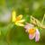verde · folha · verde · blue · sky · natureza · verão - foto stock © sweetcrisis