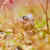 saltando · aranha · natureza · rocha · retrato · pedra - foto stock © sweetcrisis